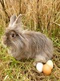 wielkanoc królik Fotografia Royalty Free