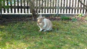 Wielkanoc królik Obraz Stock