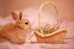 Wielkanoc, królik, królik Fotografia Royalty Free