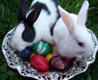Wielkanoc króliki Zdjęcia Royalty Free