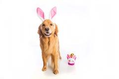 Wielkanoc pies Zdjęcie Royalty Free