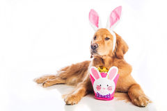 Wielkanoc pies Fotografia Stock