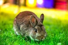Wielkanoc przychodzi, śliczny królik dłudzy ucho fotografia royalty free