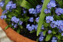WIELKANOC, wiosna kwiaty Zdjęcia Royalty Free