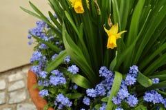 WIELKANOC, wiosna kwiaty Obrazy Royalty Free