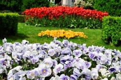 WIELKANOC, wiosna kwiaty Zdjęcie Royalty Free