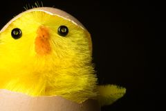 Wielkanoc wylęgu kurczaka zdjęcia stock