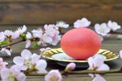 Wielkanocna karta z czerwoną Wielkanocnego jajka i menchii wiosną rozgałęzia się Fotografia Stock