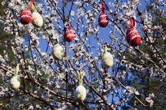 Wielkanocne dekoracje i kwiatonośny drzewo Zdjęcie Royalty Free