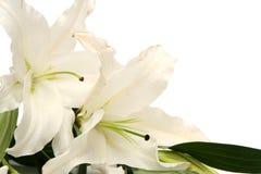 Wielkanocne leluje Obraz Royalty Free