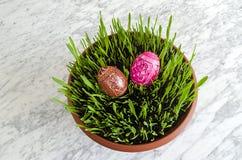 Wielkanocne rozsady Obrazy Stock