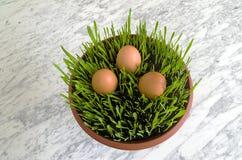 Wielkanocne rozsady Zdjęcia Stock
