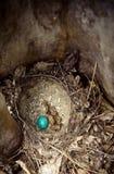 Wielkanocnego jajka gniazdeczka wydrążenia natura Obrazy Stock