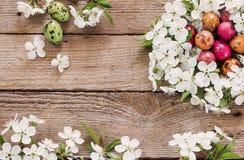 Wielkanocnego jajka gniazdeczko od białych kwiatów Zdjęcie Royalty Free
