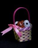 Wielkanocnego jajka kosz Z piłki nożnej & koszykówki jajkami Obrazy Stock