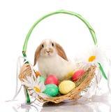 Wielkanocnego królika obsiadanie w koszu zdjęcia royalty free