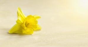 Wielkanocnej karty i sztandaru pomysł Obraz Royalty Free