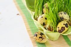 Wielkanocni ciastka i jajka z trawą Zdjęcie Stock