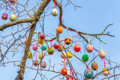 Wielkanocni Drzewni jajka Obraz Royalty Free