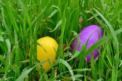 Wielkanocni jajka Żółci & Purpurowi obrazy stock