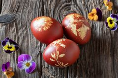 Wielkanocni jajka farbujący z cebulkowymi łupami z wzorem świezi ziele obrazy royalty free