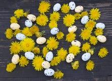 Wielkanocni jajka i dandelion fotografia stock
