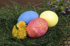 Wielkanocni jajka I Dandelions Zdjęcia Stock