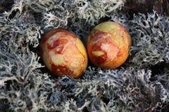 Wielkanocni jajka na mech Obrazy Royalty Free