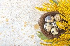 Wielkanocni jajka w gniazdeczku Fotografia Royalty Free