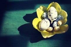 Wielkanocni jajka w gniazdeczku tulipany zdjęcia stock