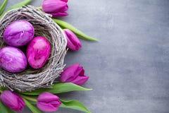 Wielkanocni jajka w gniazdowym und tulipanie Szary tło Zdjęcie Royalty Free
