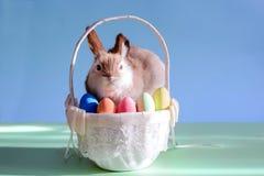 Wielkanocni jajka w koszu z trawą i królikiem Zdjęcia Royalty Free