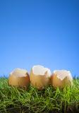 Wielkanocni jajka w trawie Zdjęcia Royalty Free