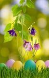 Wielkanocni jajka w trawie i kwiatach Zdjęcia Stock