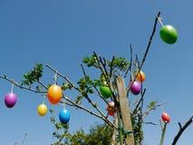Wielkanocni jajka Wiesza na drzewie zdjęcie royalty free