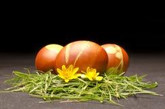 Wielkanocni jajka z żółtym kwiatem Fotografia Royalty Free