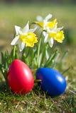 Wielkanocni jajka z daffodil w wiośnie Obraz Royalty Free