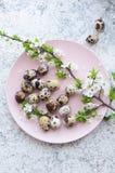 Wielkanocni jajka z gałąź wiosny czereśniowy okwitnięcie zdjęcia royalty free