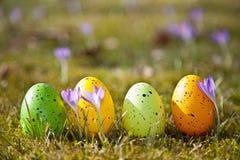 Wielkanocni jajka z krokusem Obraz Royalty Free