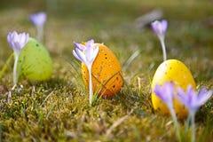 Wielkanocni jajka z krokusem Obrazy Royalty Free