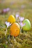 Wielkanocni jajka z krokusem Zdjęcia Royalty Free