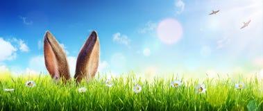 Wielkanocni karta ucho królik Pojawiać się W trawie zdjęcia stock