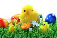 Wielkanocni kurczątka zdjęcia stock