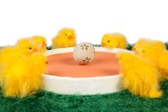 Wielkanocni kurczątka i jajko Obrazy Royalty Free