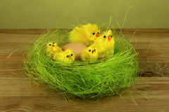 Wielkanocni kurczątka z jajkiem w gniazdeczku Obraz Royalty Free
