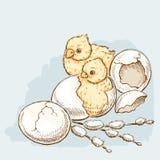 Wielkanocni kurczaki klują się Zdjęcie Stock