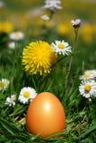 Wielkanocni polowań jajka w łące Obraz Royalty Free
