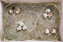 Wielkanocni przepiórek jajka Zdjęcia Stock