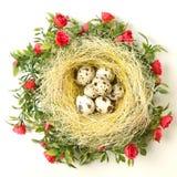 Wielkanocni przepiórek jajka w gniazdeczku Obraz Royalty Free
