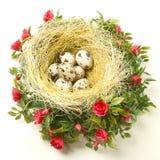Wielkanocni przepiórek jajka w gniazdeczku Zdjęcia Royalty Free